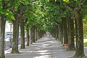 Lugano allée d'arbres